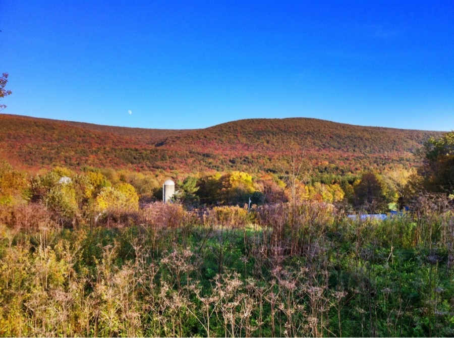 [Image: Image by @AnthonyQuintano - We have a #foliage sighting on US 7 just a few minutes north of Bennington, Vermont. #Fall #VT on Propic]