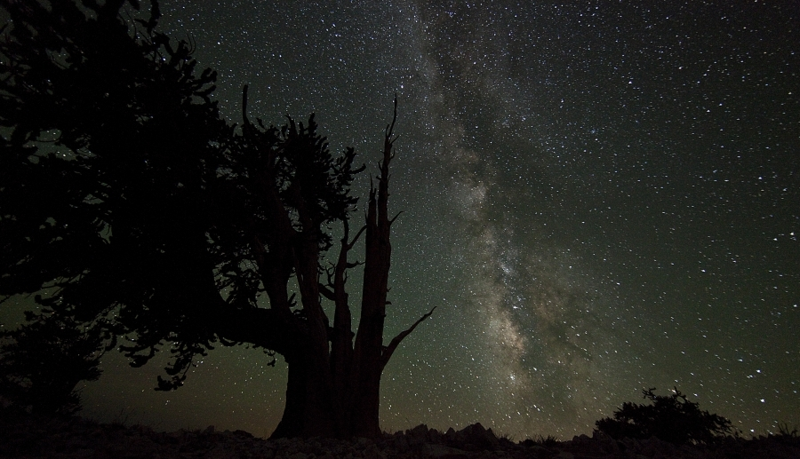 [Image: Bristlecone1 by @drkanab - My frame from last night's astro timelapse at the Ancient Bristlecone Forest during #Timefest :) on Propic]