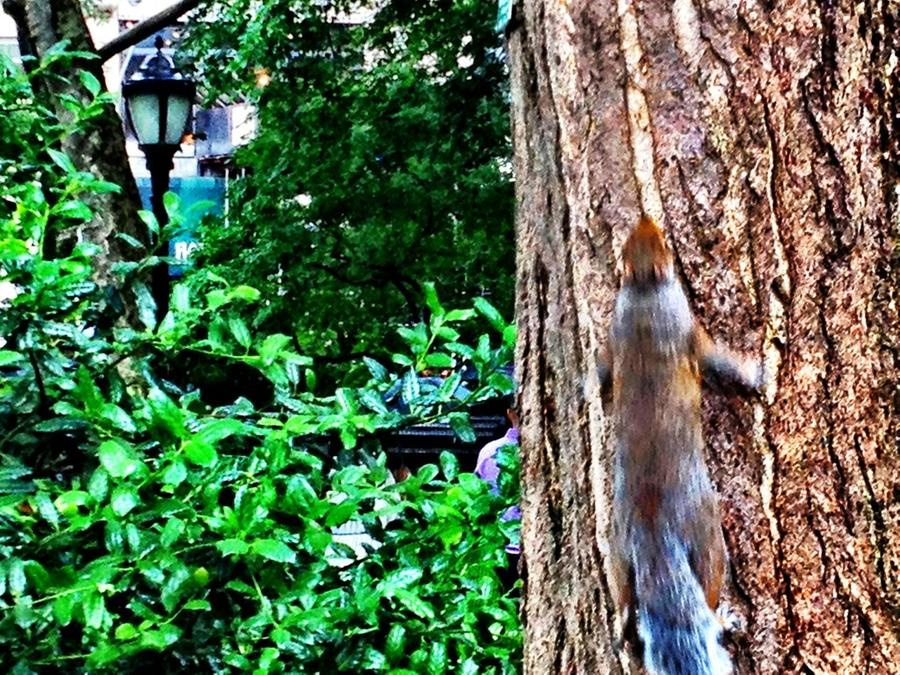 [Image: Squirrel on the move! by @LordOfVisions - Squirrel on the move!I spotted this squirrel running up a tree in Madison Square Park, NYC during my lunch break. on Propic]