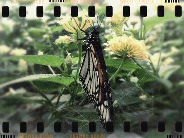 [Image: Image by @MNS1974 - Butterfly at Bronx Zoo on Propic]
