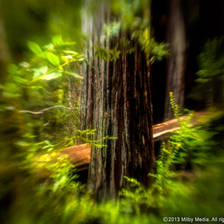 [Image: Big Basin RW-008 by ClintMilby]