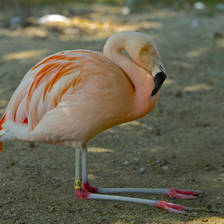 [Image: Flamingo by MNS1974]