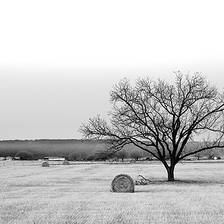 [Image: Winter Field by shutterdrone]