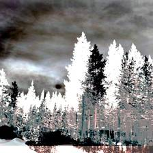 [Image: Winter Forest]
