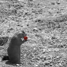 [Image: Prairie Dog]