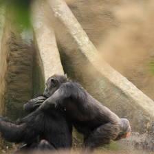[Image: Monkey Love]