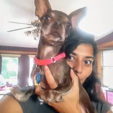 [Image: Rikki the wonder dog]