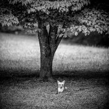 [Image: Fox under the tree]