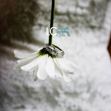 [Image: Bride's Rings on Flower by CineCicale45]