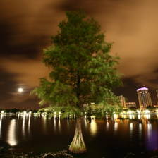 [Image: Lake Eola Tree by ChuckmanFIlms]