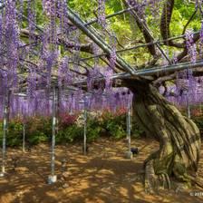 [Image: ashikaga-garden-15 by deloprojet]