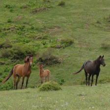 [Image: Wild horse family by mah_S_moh]