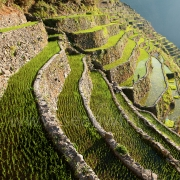 [Image: SFW011 Batad Banaue Rice Terraces Philippines 005 by SeanFWhite]